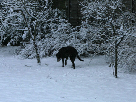 Rocky in the snow