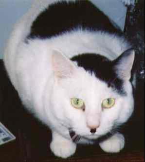 Kitler, from catsthatlooklikehitler.com