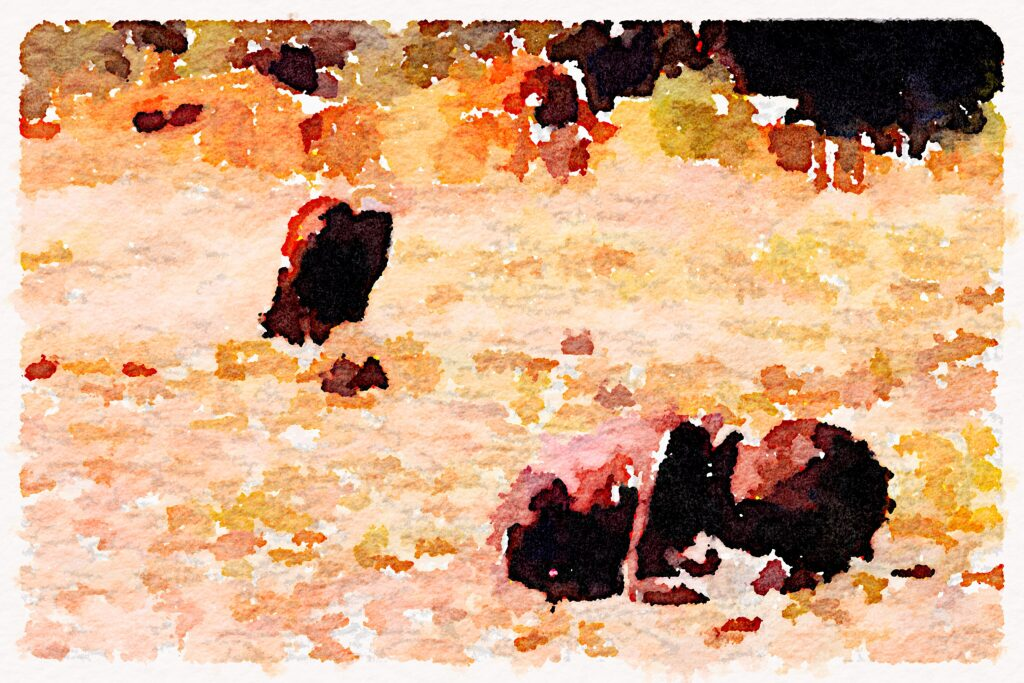 'Vulture' by Kevin Carter